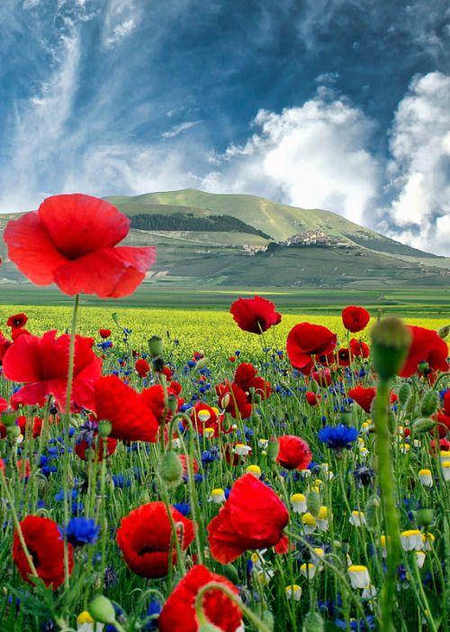 بستان ورد المصــــــــراوية Flower-images-28