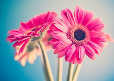 رمزيات ورد وزهور-رمزياتي