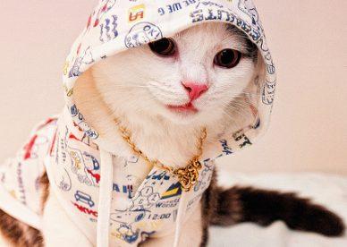 رمزيات أحلى قطط في العالم - رمزياتي