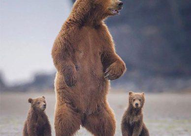 رمزيات حيوانات الدب Bear Photo - رمزياتي